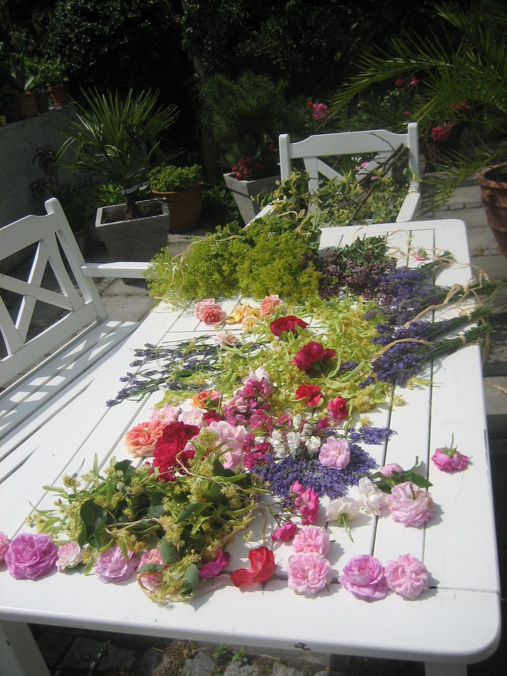 Bilder   terdén gardencenter